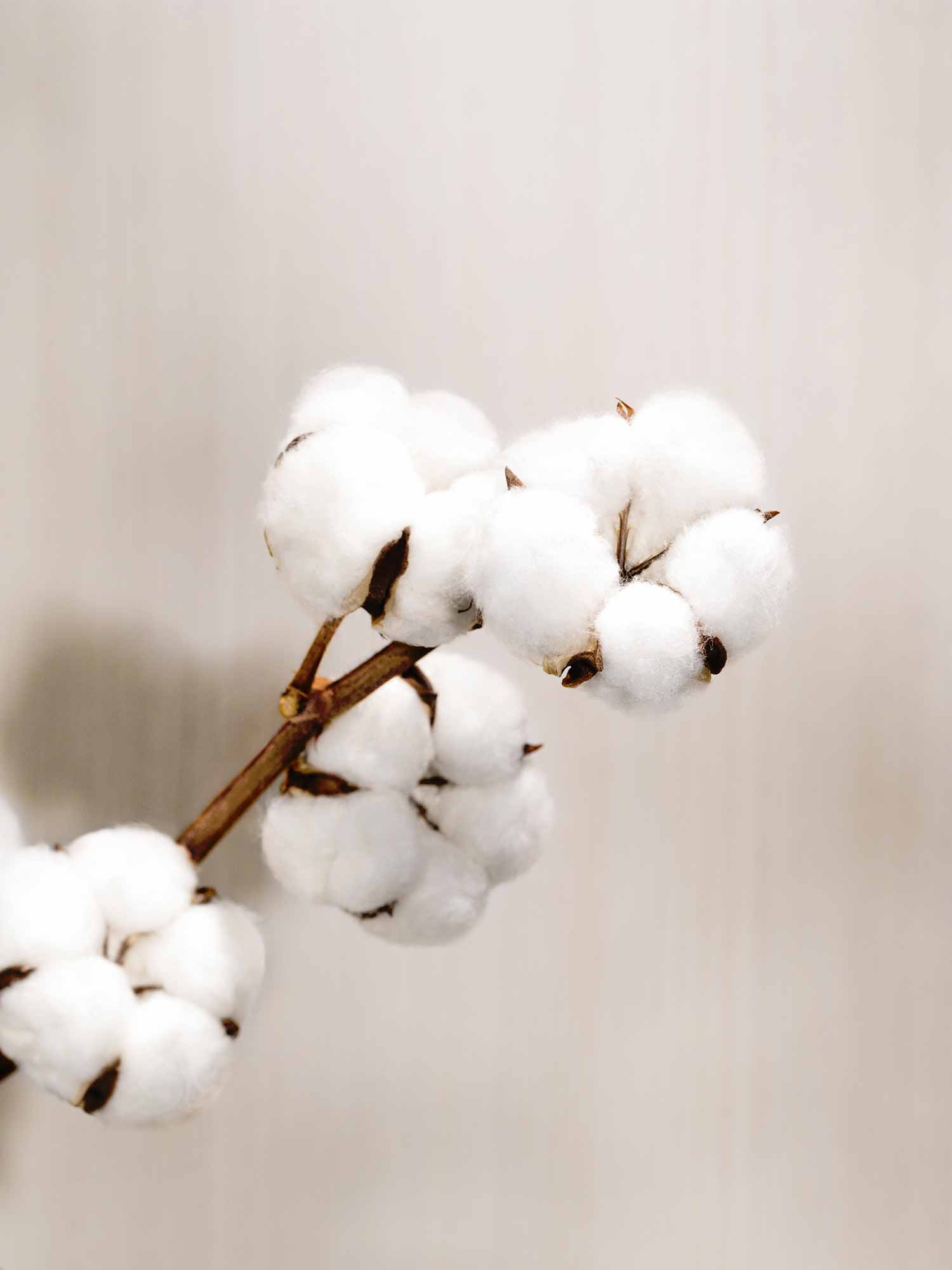 Baumwolle - Atmungsaktiv und gleichzeitig isolierend | mey®