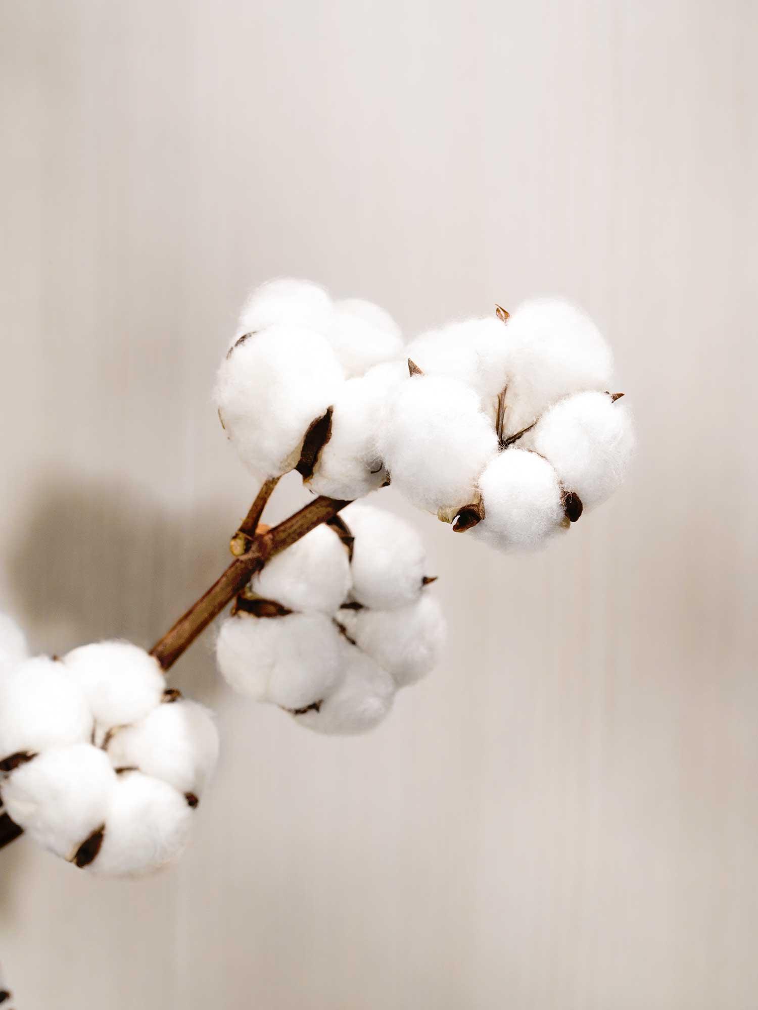 Baumwolle der Extraklasse | mey®