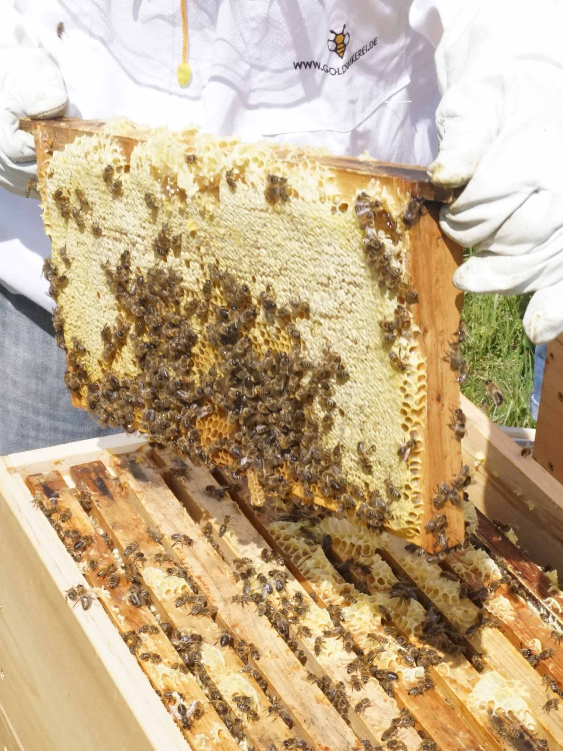 Imker in weißer Schutzkleidung entnimmt einen Wabenrahmen aus dem Bienenstock | mey®