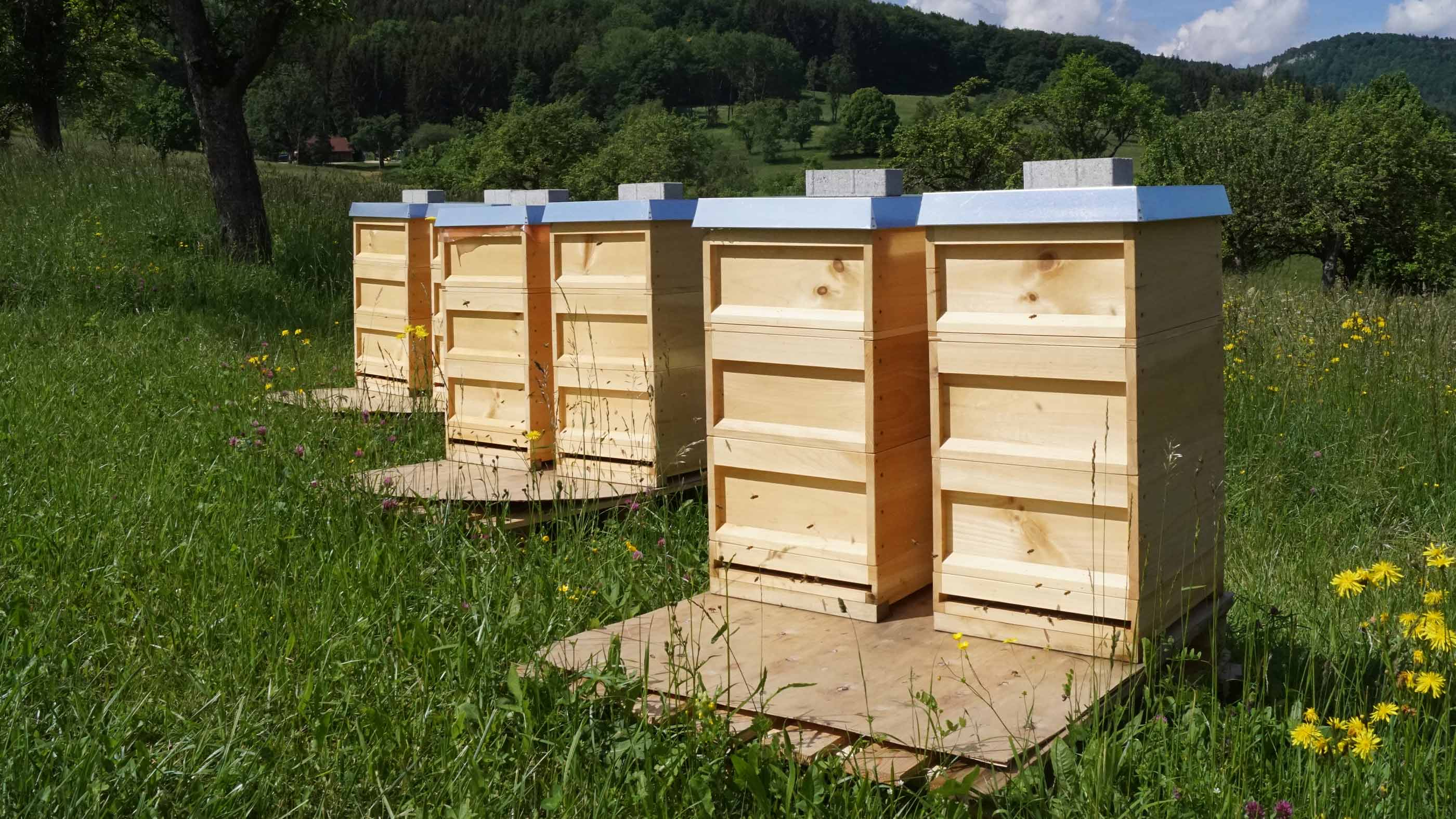 De zes bijenkasten van mey staan per paar in een rij op een wei in Lautlingen, Duitsland   mey®