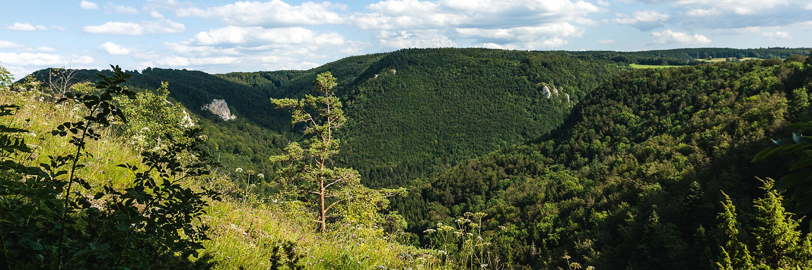 mey® Landschaftsbild von der Schwäbischen Alb im Sommer, grüne Wiese mit Baum und Büschen im Vordergrund, bewaldete Hänge im Hintergrund