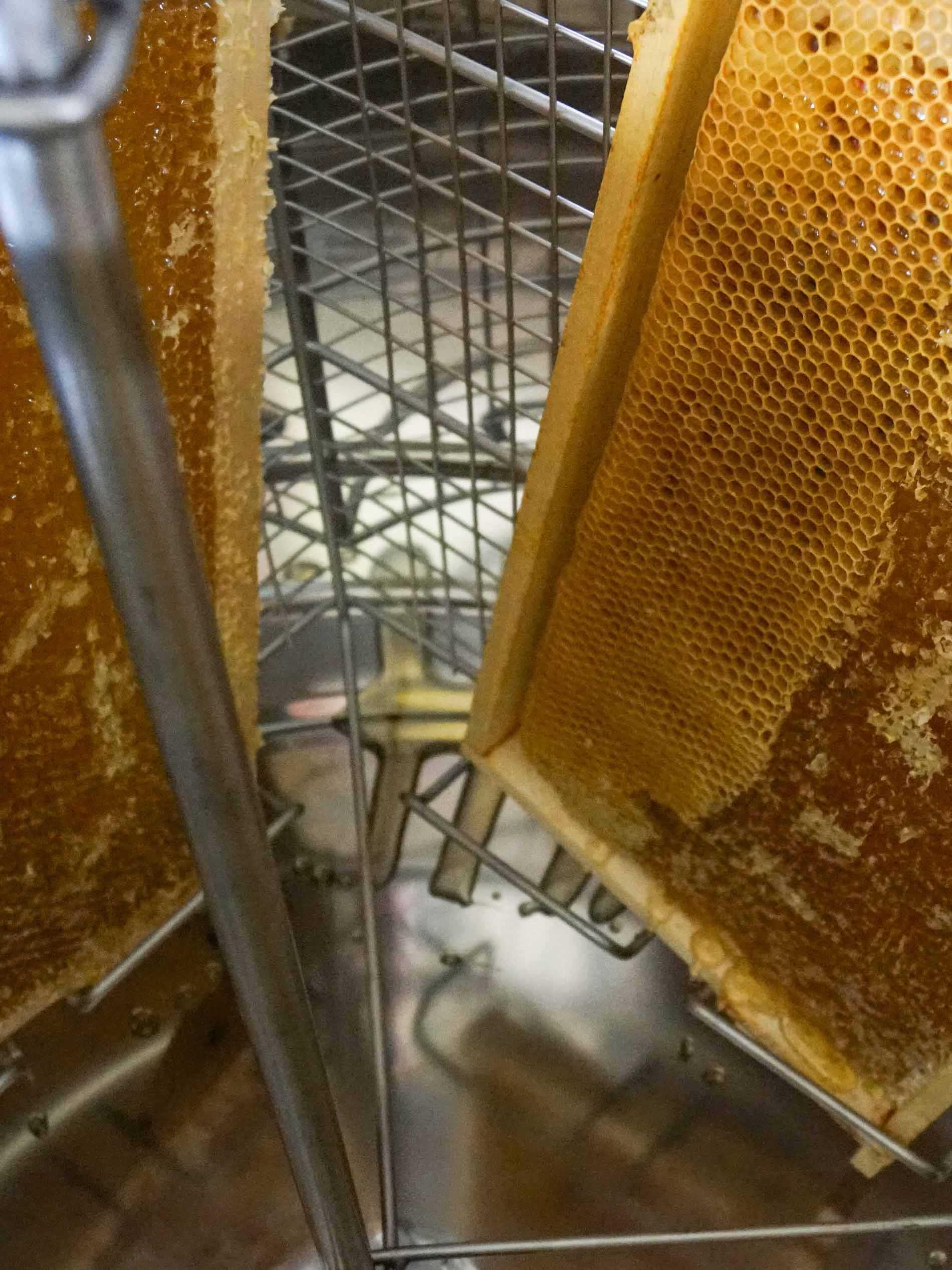 De honingraten worden rechtop in de slinger gezet   mey®